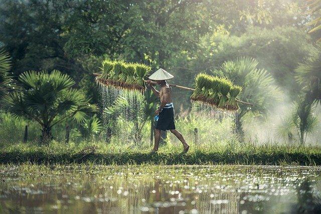 Hors des sentiers battus au Cambodge