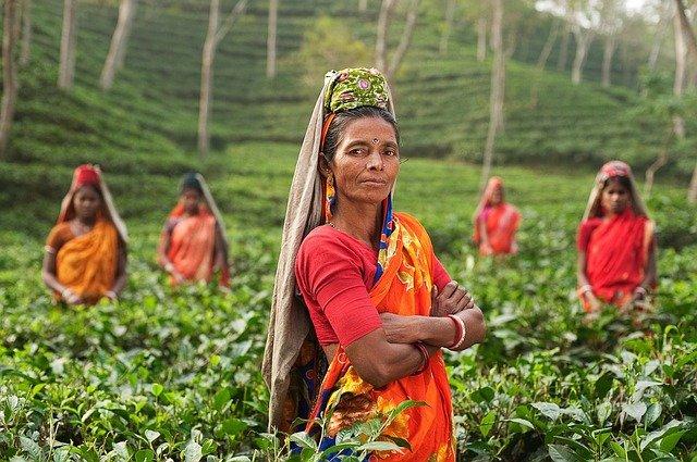 Ce qu'il faut savoir sur la culture du thé en Inde