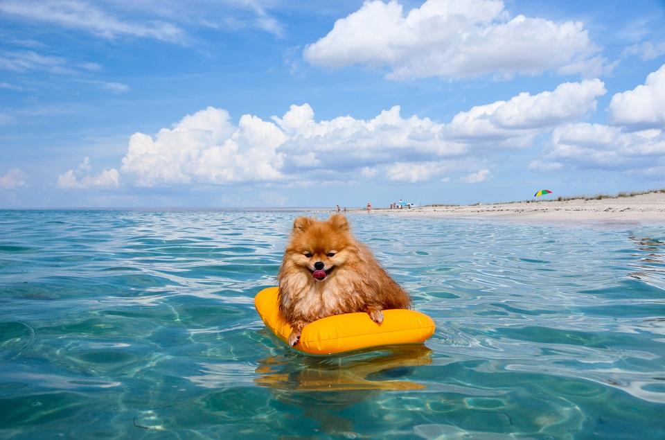 Première sortie à la mer : comment préparer votre chien ?